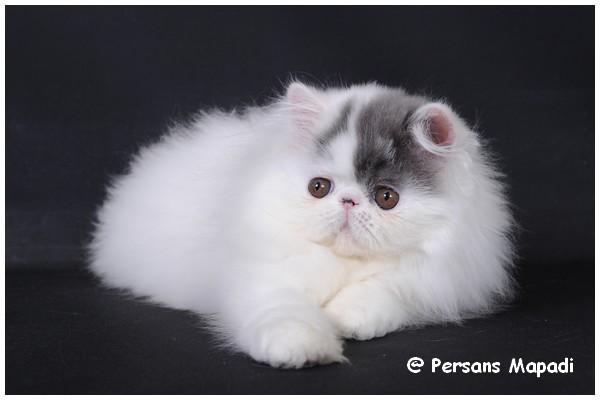 charenton chat sites Vous cherchez une personne pour prendre soin de votre animal à charenton-le- pont promenade, visite, famille d'accueil pour les vacances  trouvez en 2.